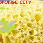 sponge city città spugna