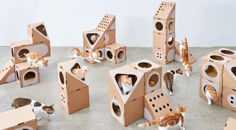 A_CAT_THING_02_StudioW-034 gatto casa