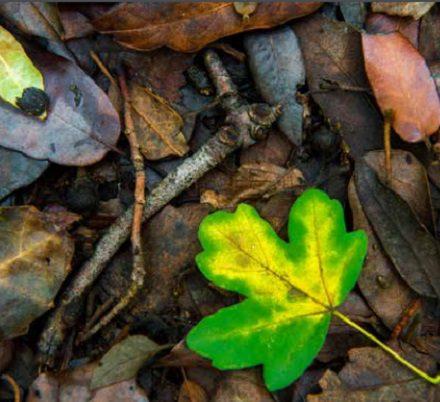 gabriele de filippo bosco